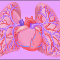 Diagram for Hank the Heart: What is Pulmonary Hypertension animation