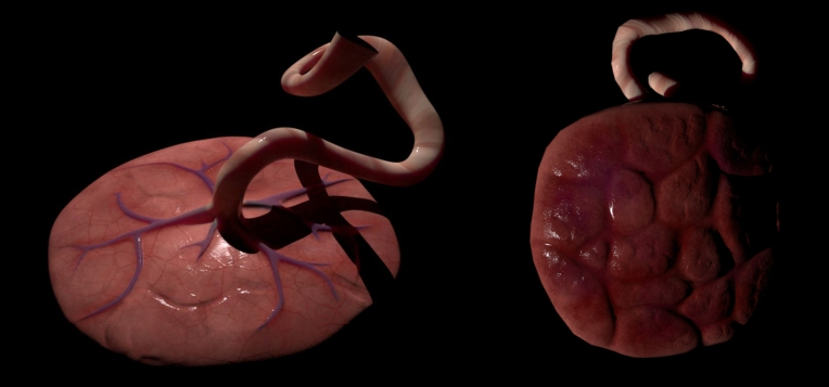 Placenta and Umbilical cord, Maya and Substance Painter